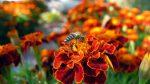 Die Zukunft von Honig- und Wildbienen sichern