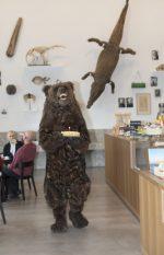 Ein Jahr neues Naturmuseum St. Gallen – Hier tanzt der Bär
